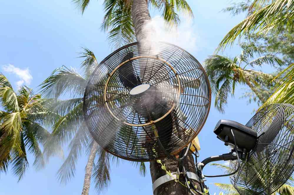 Misting Fan Palm