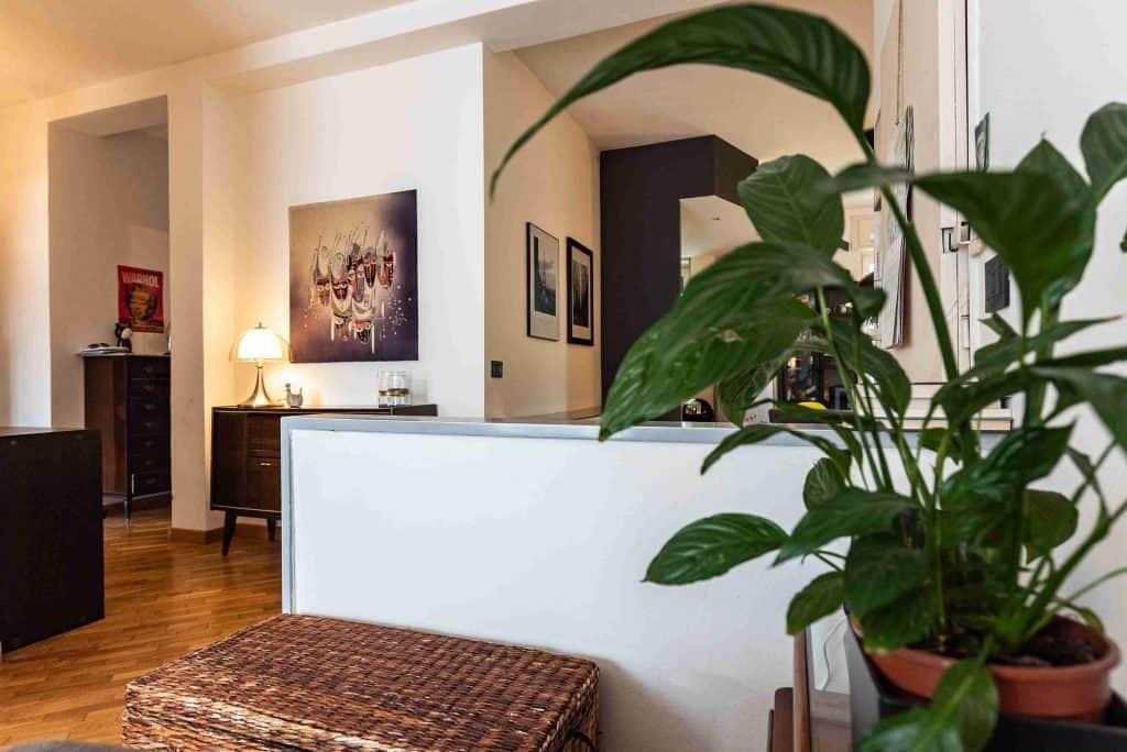 Indoor Plant Indoor Air Quality